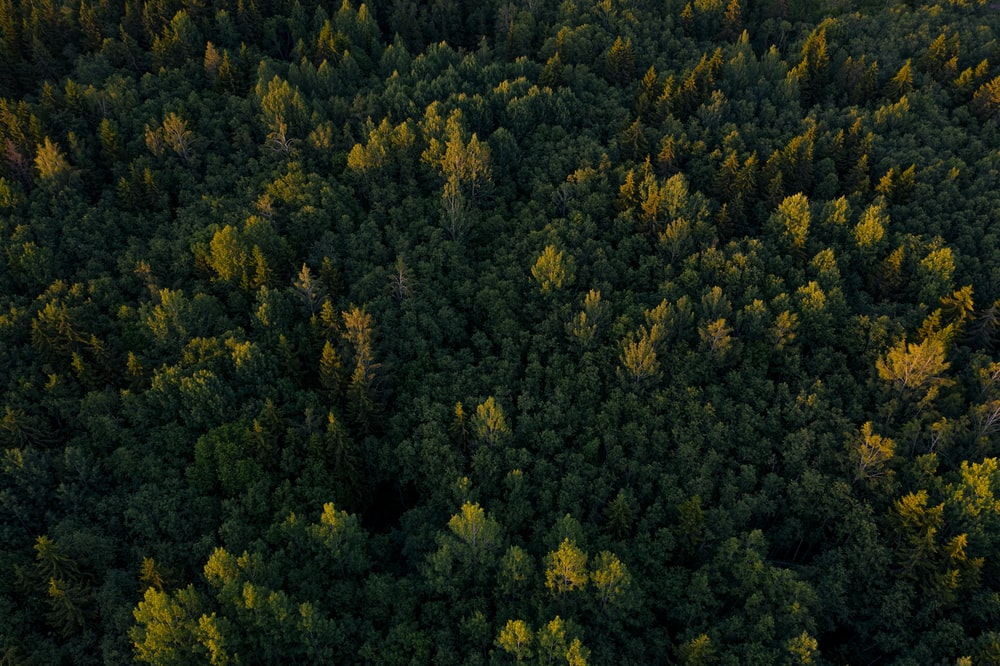 aerial photography of forest with green trees