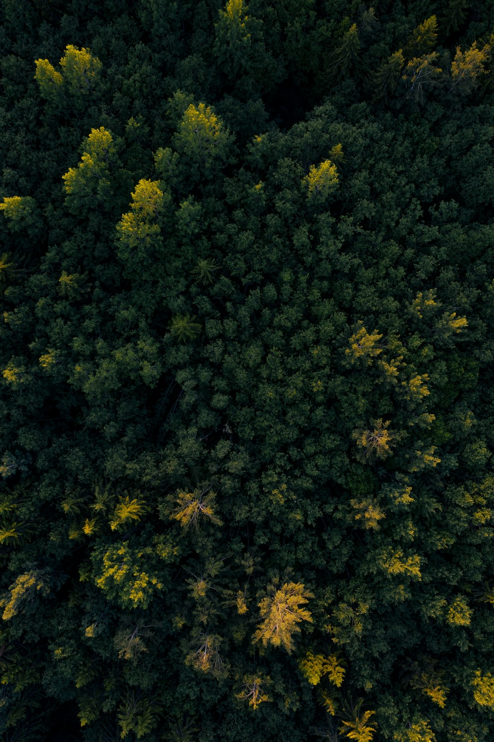 aerial photo of green forest