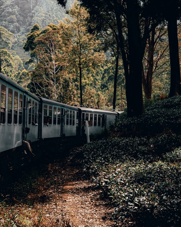 Scenic train ride in Srilanka