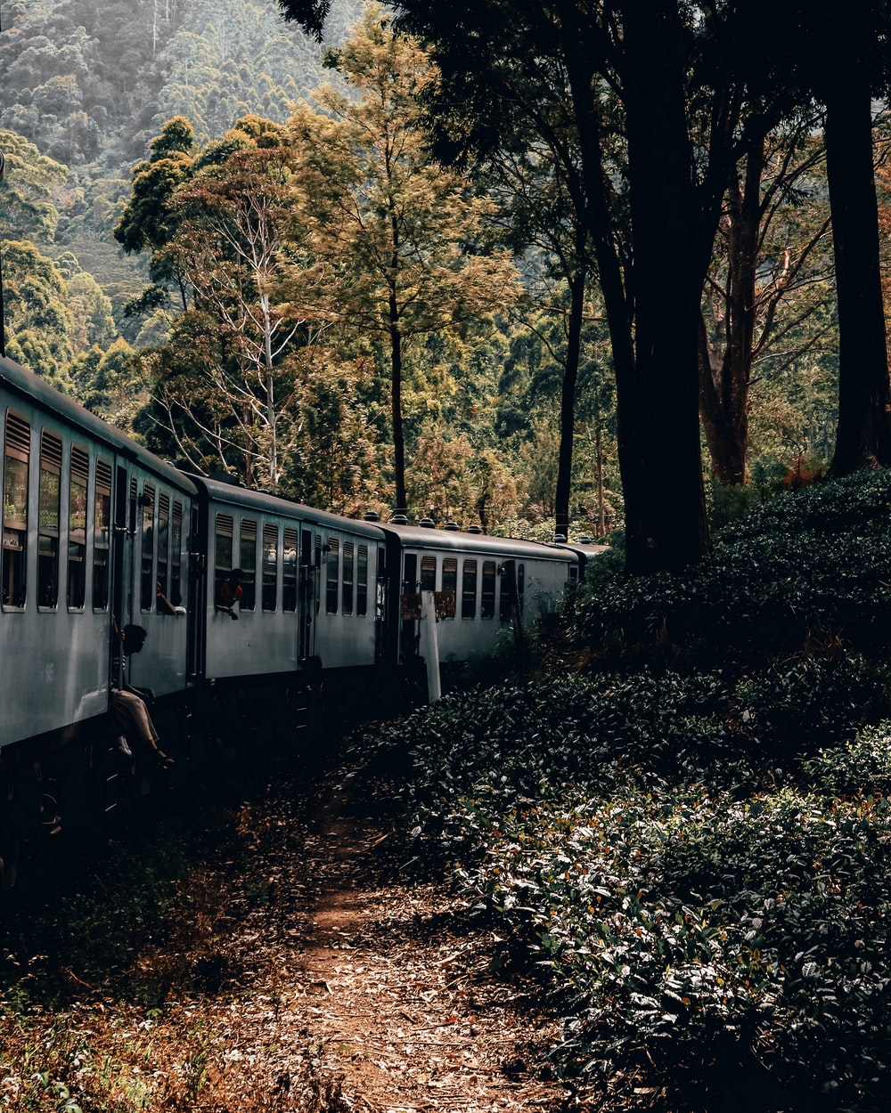 white train in forest
