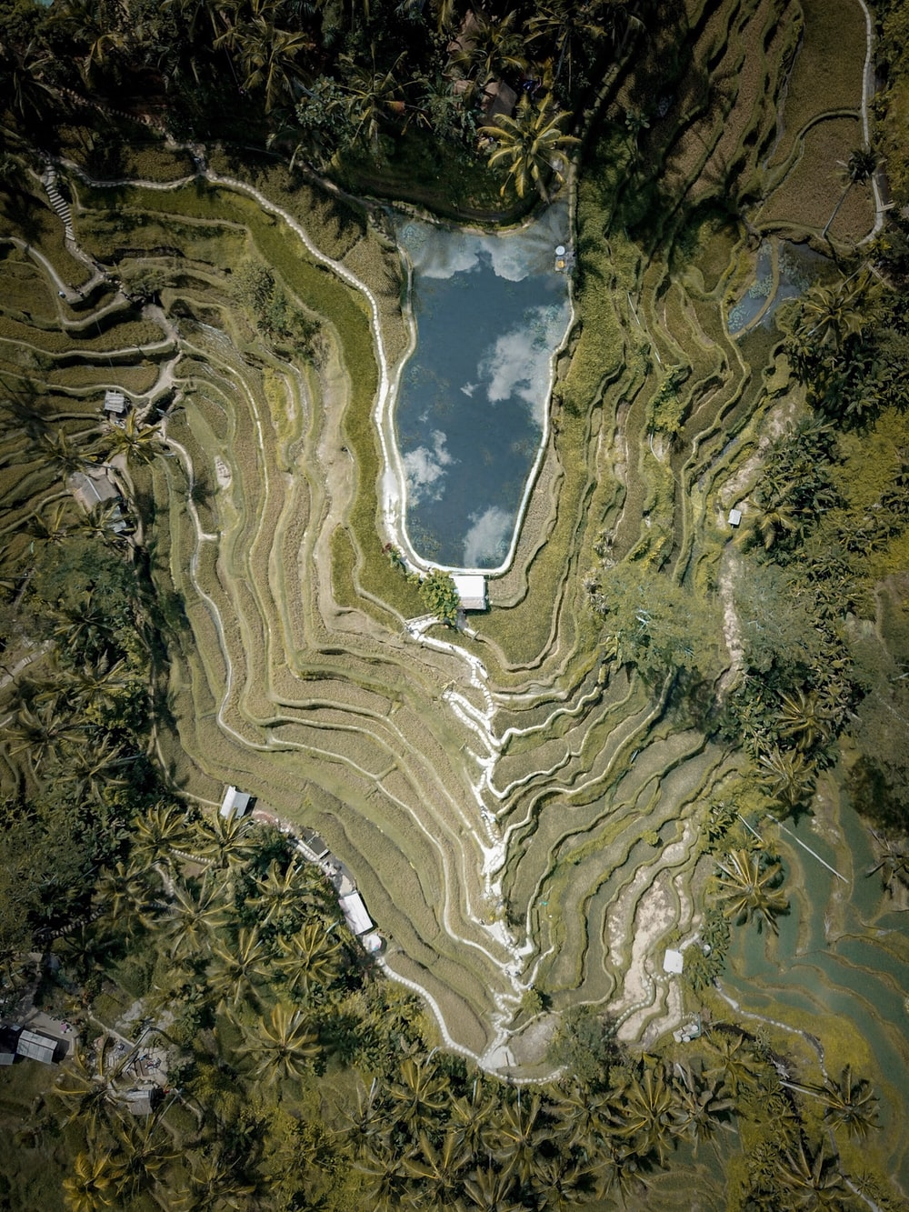 high-angle photography of terraces