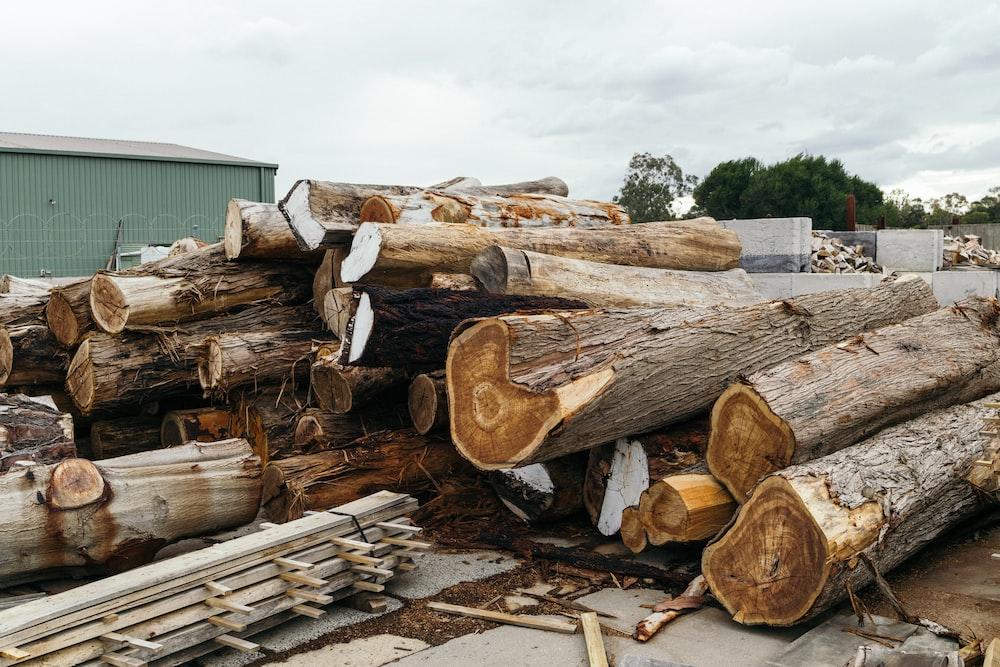 brown log lot during daytime