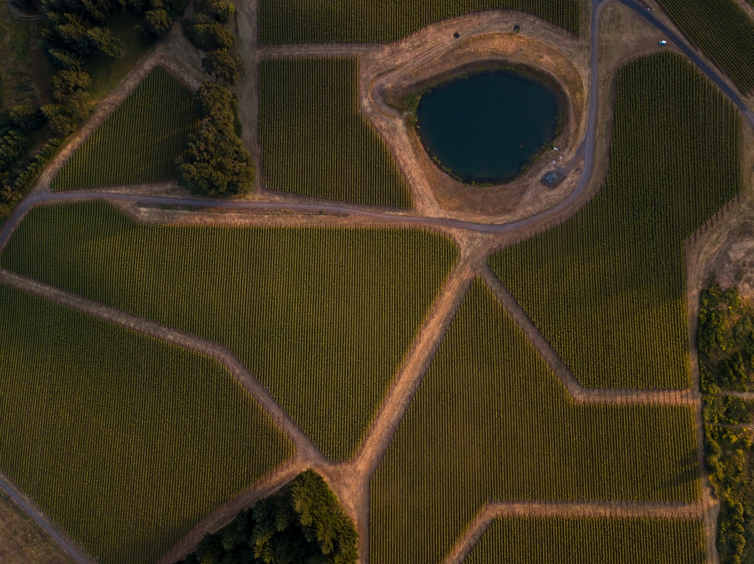 I was going for subtle yet obvious curves, colors and depth--I think I nailed it. Those vines and the red volcanic soil looked amazing as the sun was setting. I've been playing around with straight down bird's-eye photos like this one and using the natural shadows and lines to bring out the depth and terrain. I took this with my drone over a vineyard on the side of a large hill in Marion County, Oregon. I don't care what anyone says--I love this photo!
