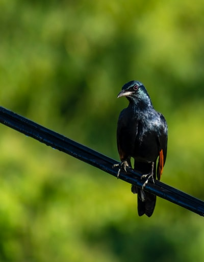 selective focus photography of black bird on black cable