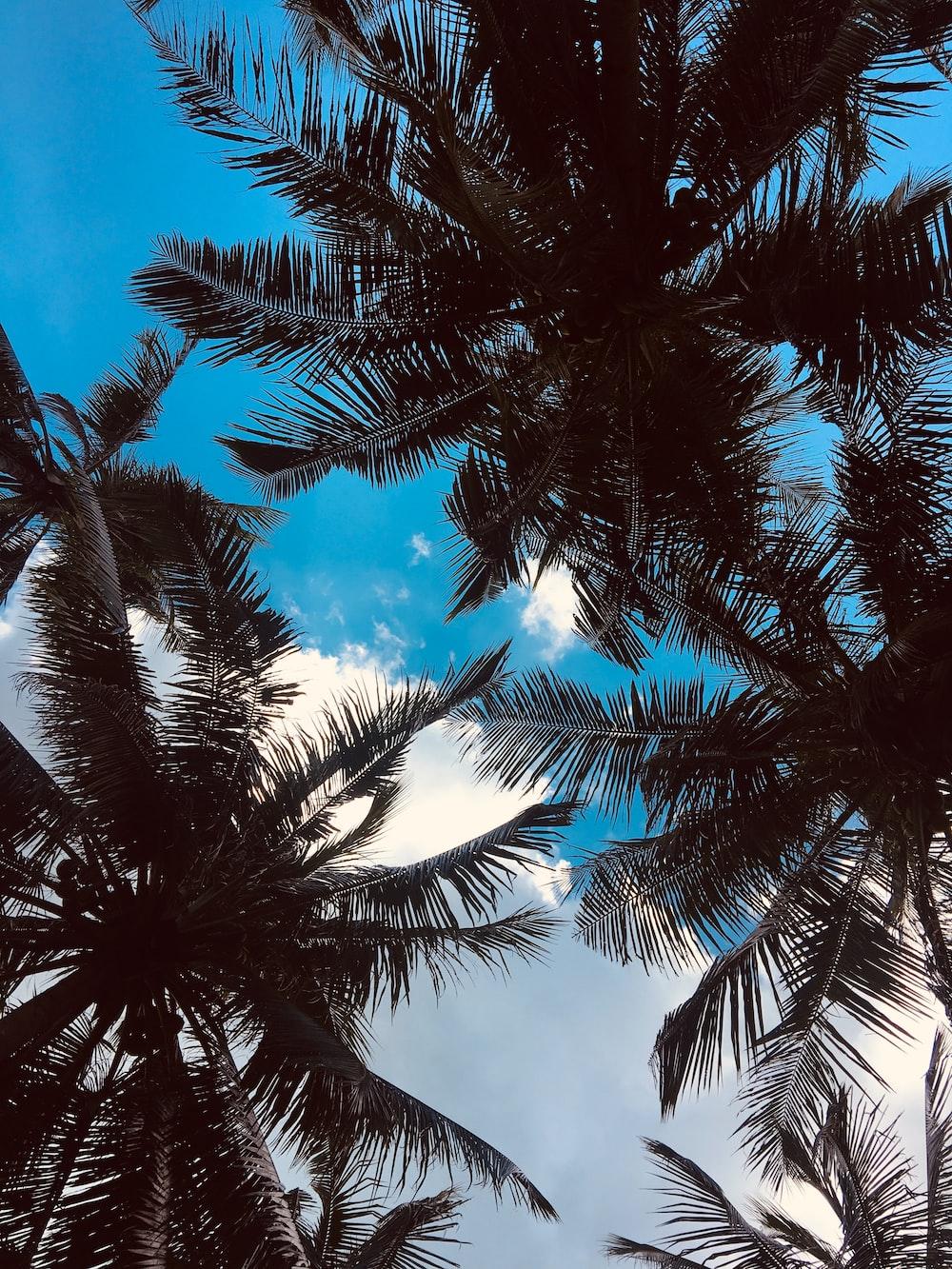 green palm trees across blue sky