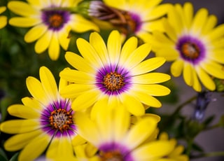 close up photography of yellow-petaled flowers