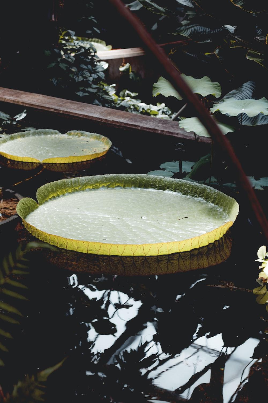 round green leaf on water