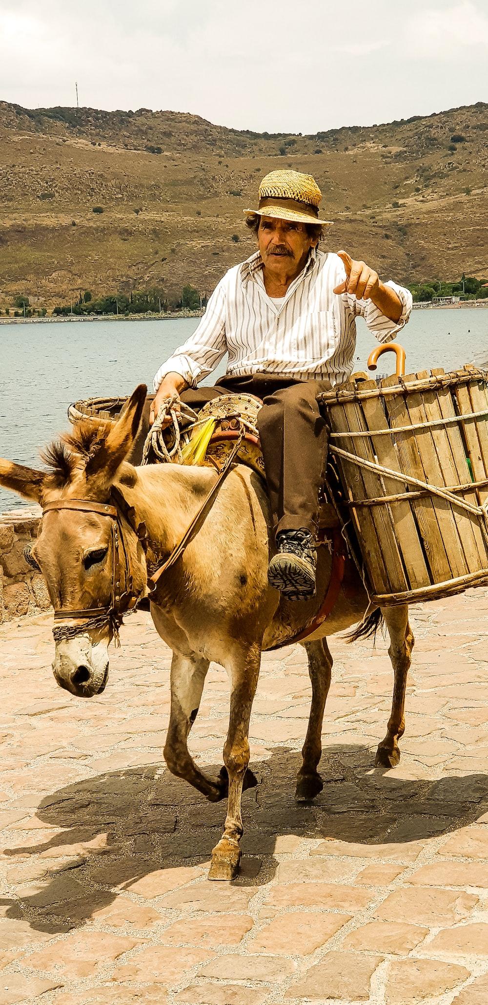 man riding on donkey