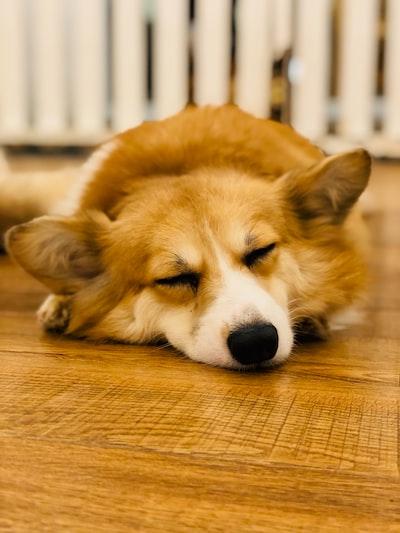 selective focus photography of dog sleeping on floor