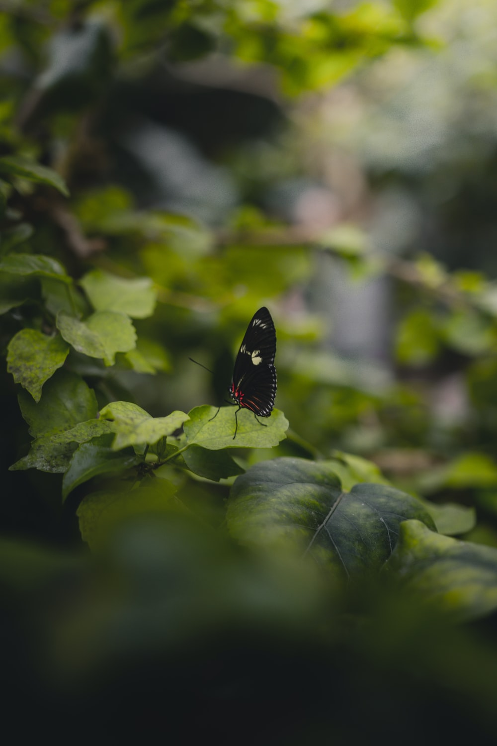 black butterfly on leaves
