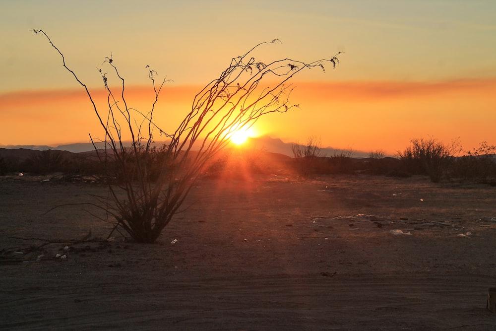 orange setting sun in horizon
