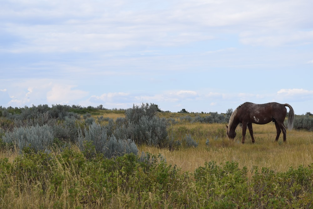 brown horse grazing at daytime