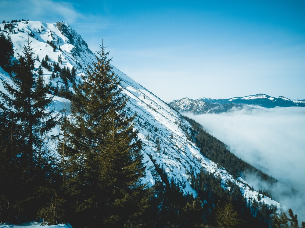 green trees on mountain covered with snow
