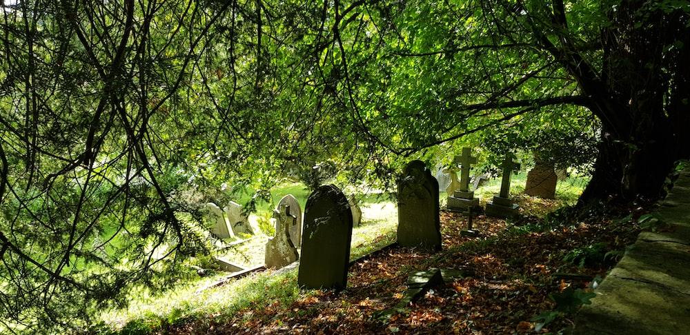 tombstones under trees