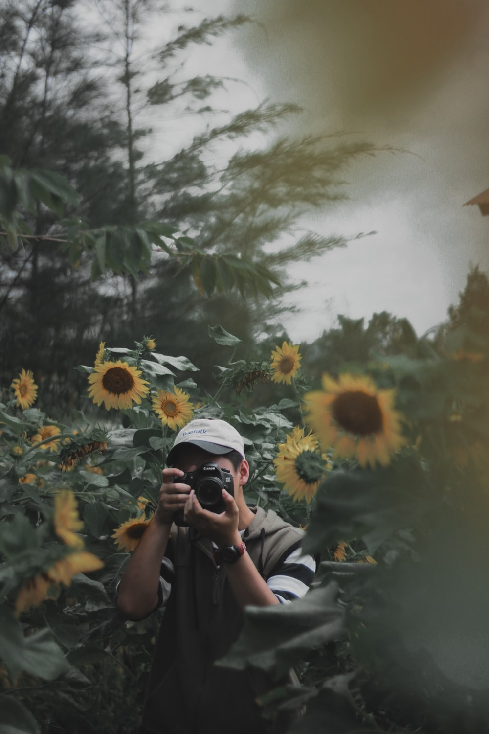 person using DSLR camera surrounded bu sunflowers