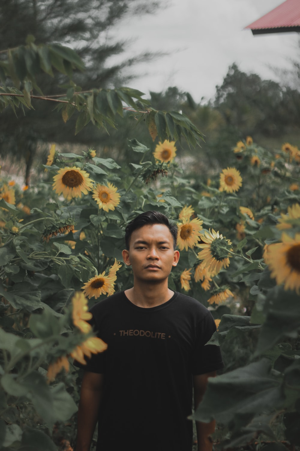 selective focus photography of man surrounded with sunflowers
