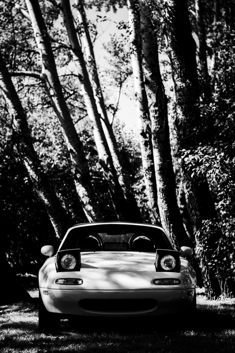 greyscale photography of vehicle near tree