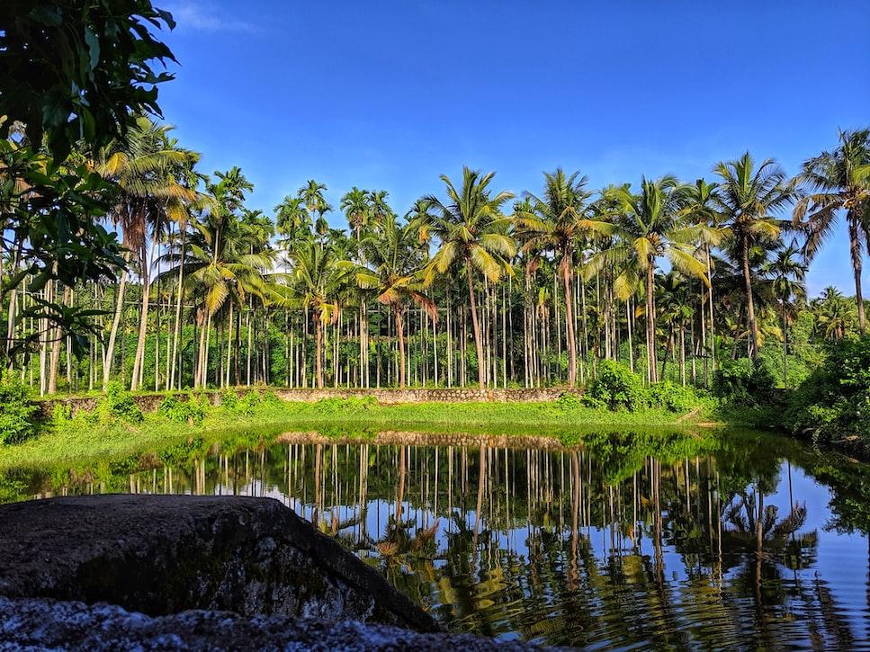 Beautiful greeneries of Chalakudy