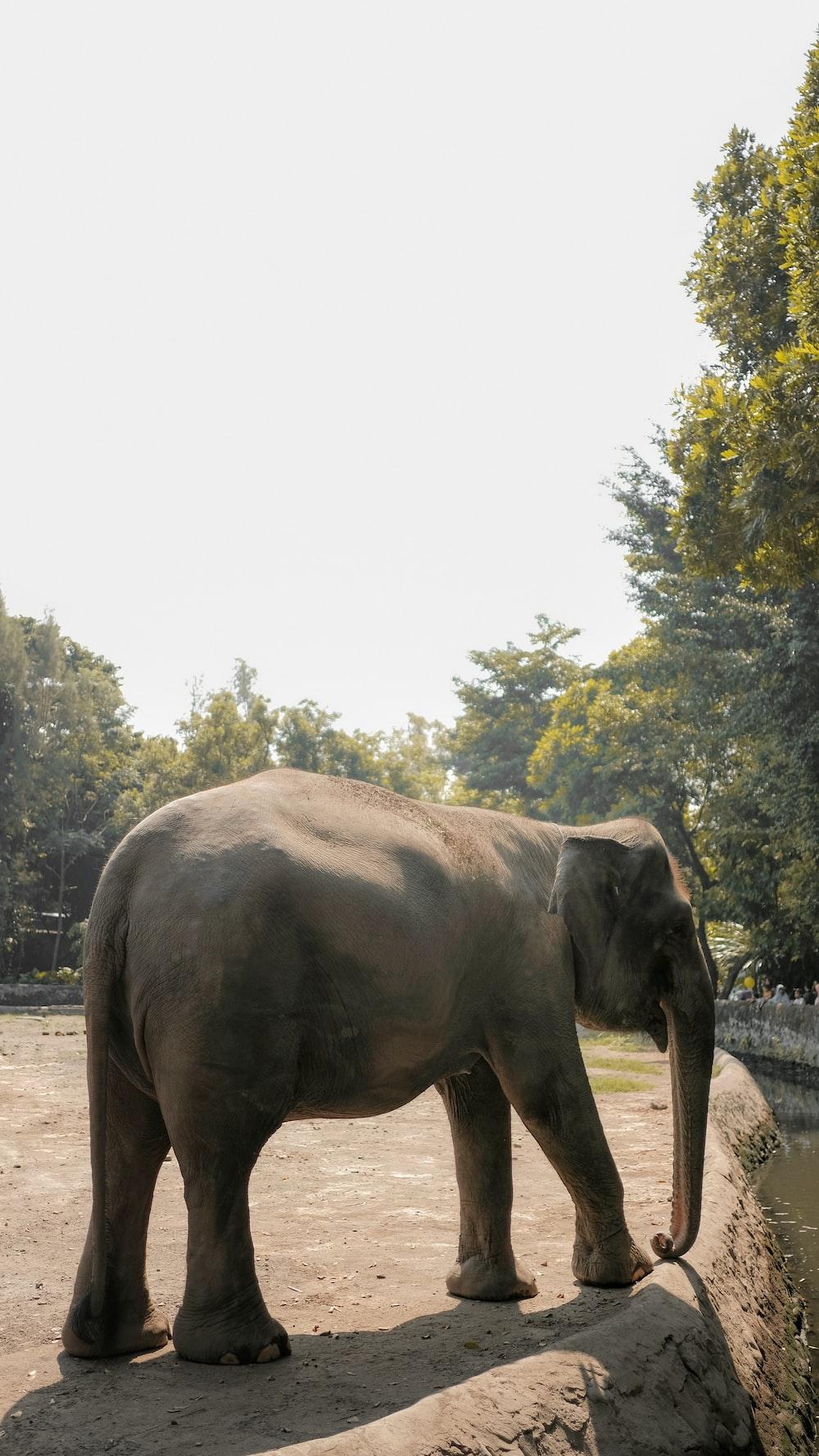 elephant near cliff