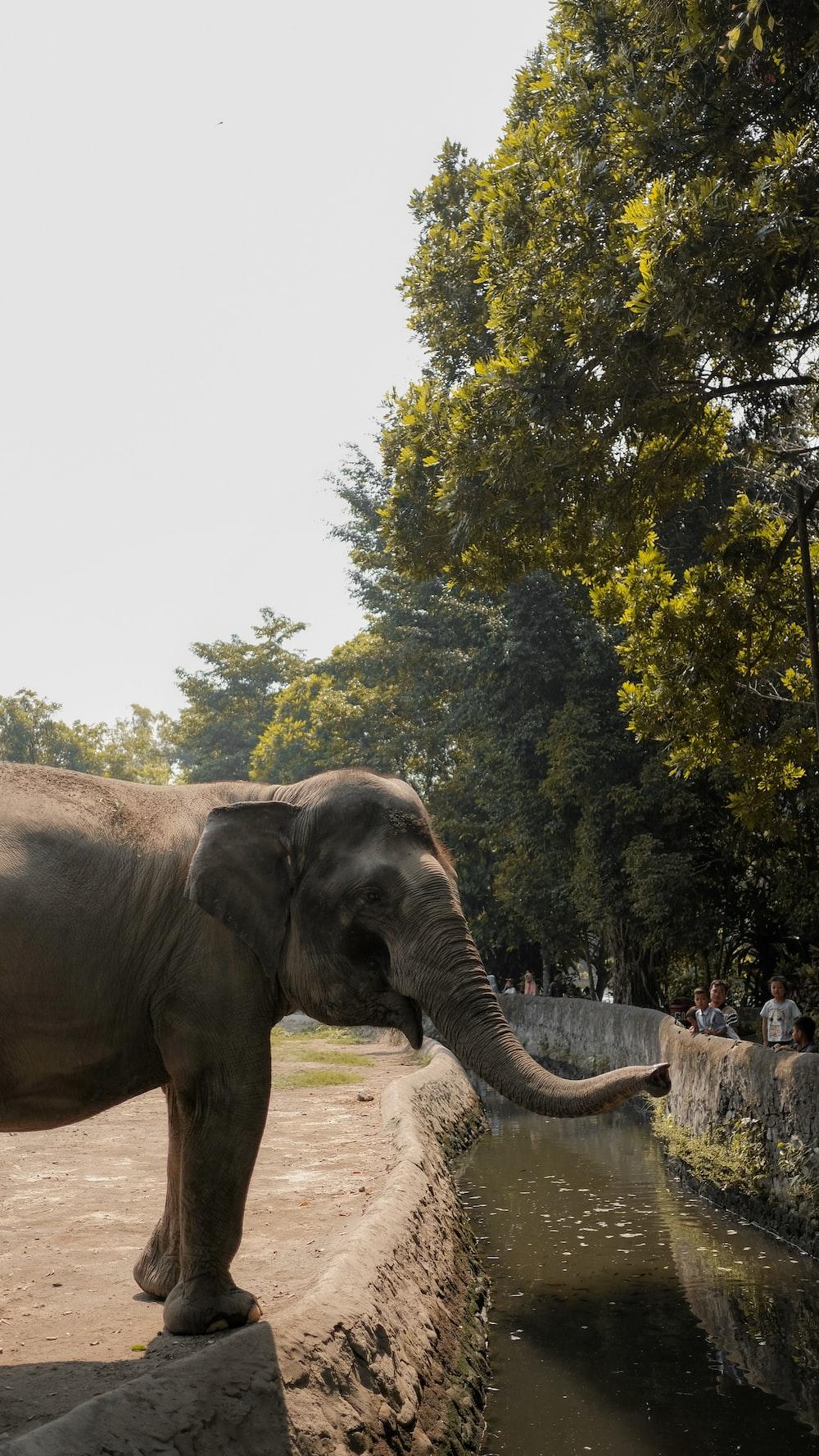 brown elephant across green trees