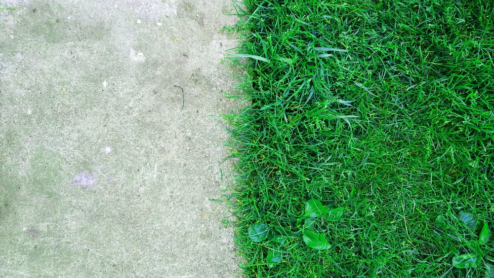 green grass beside gray concrete ground