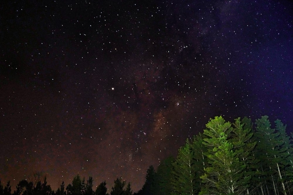 low-angle photography of trees under galaxy
