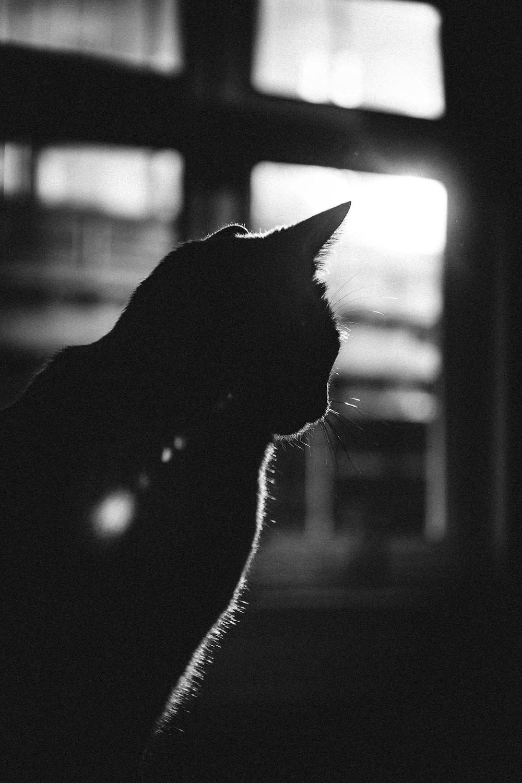 silhouette of cat near window