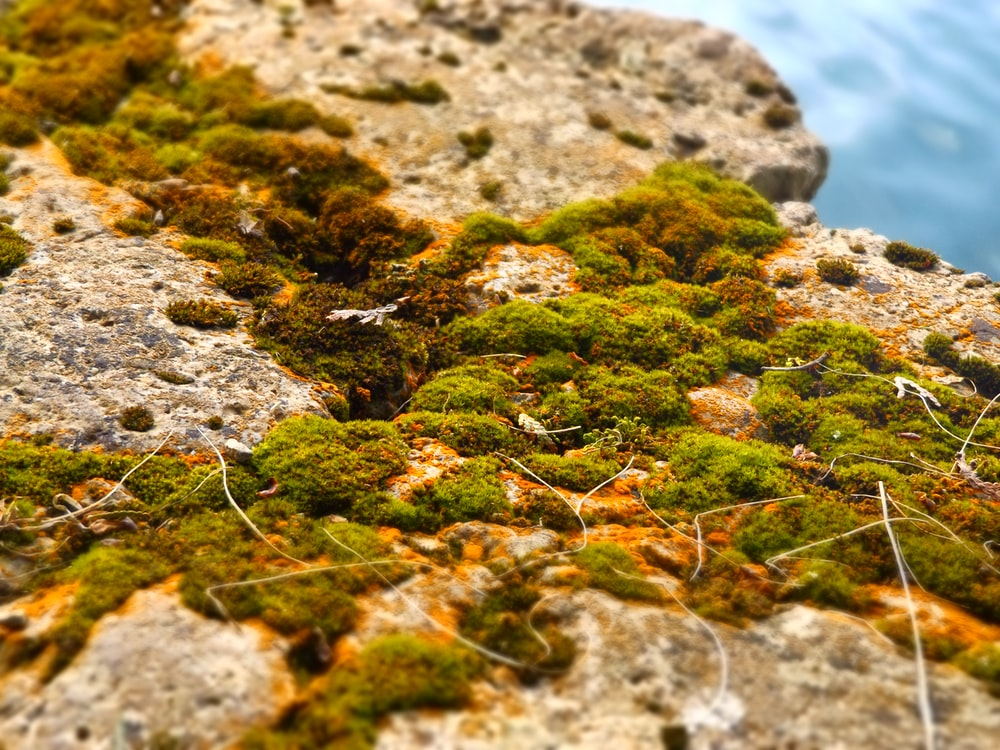 rocks covered with green moss