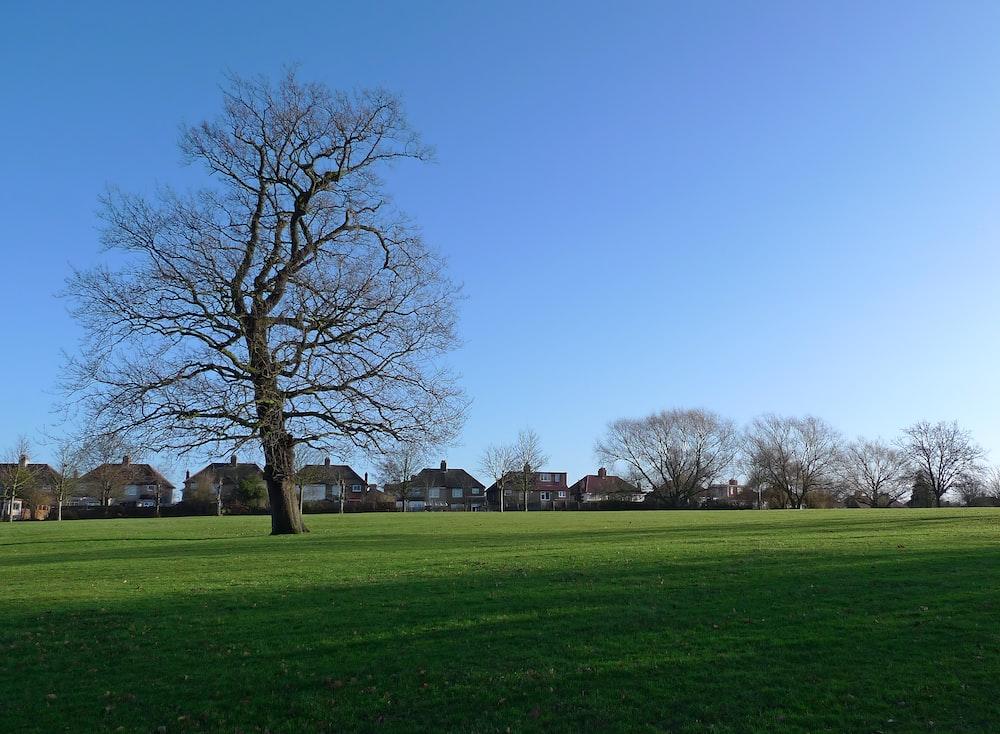 tree at a green lawn