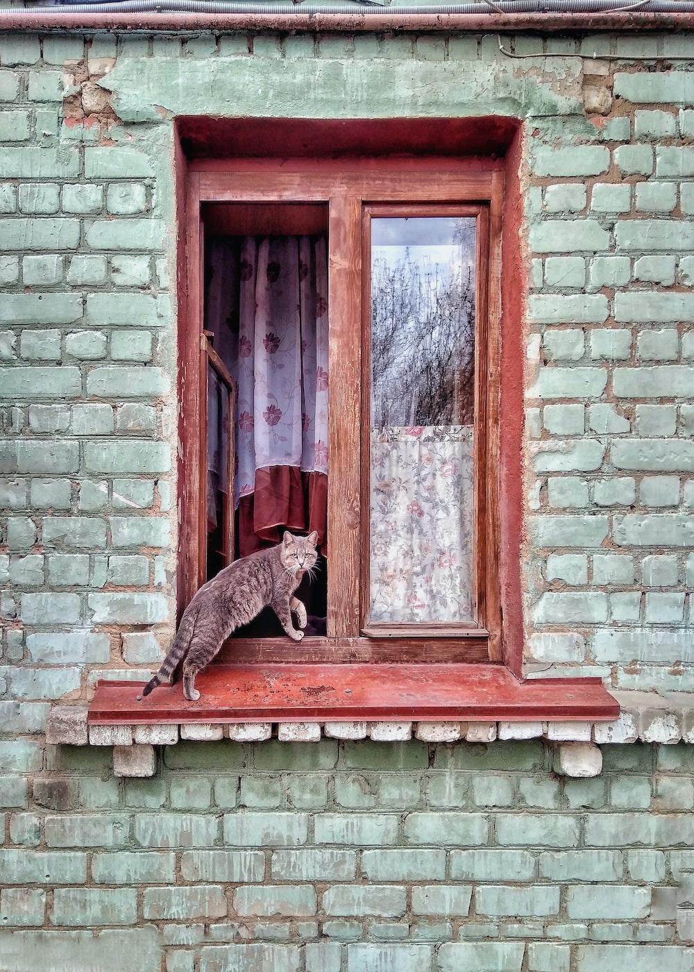 gray tabby cat on a brown window