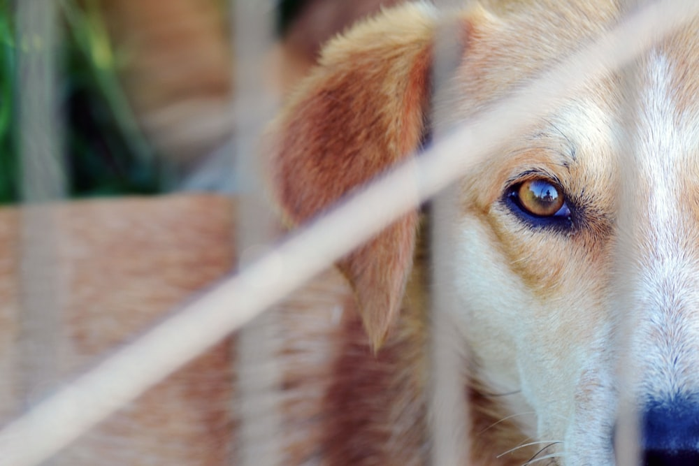 short-coat brown dog in close-up photography