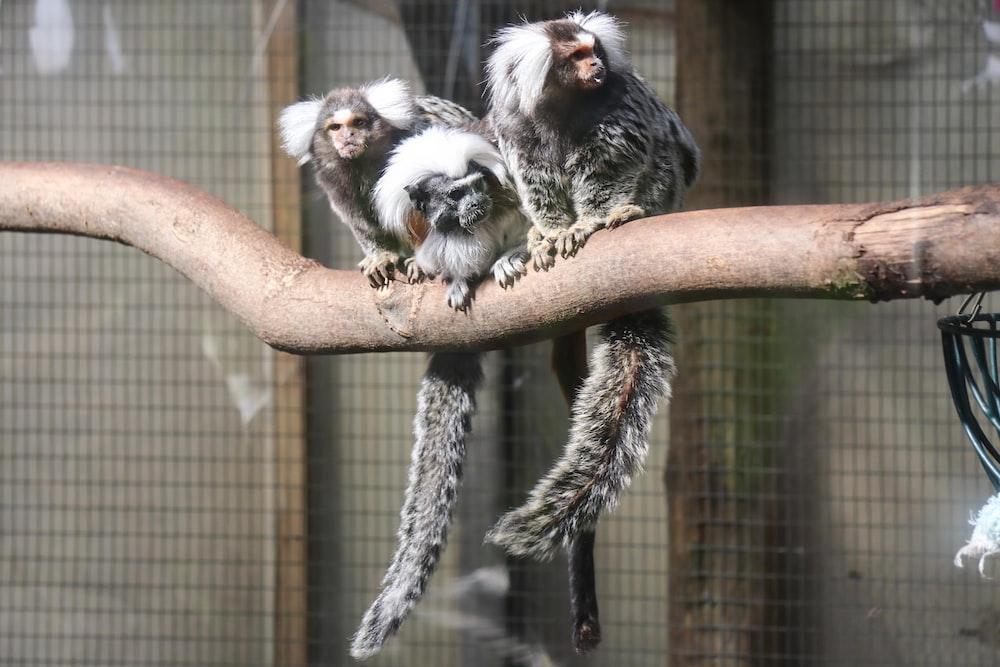 animals in a brown wooden branch during daytime