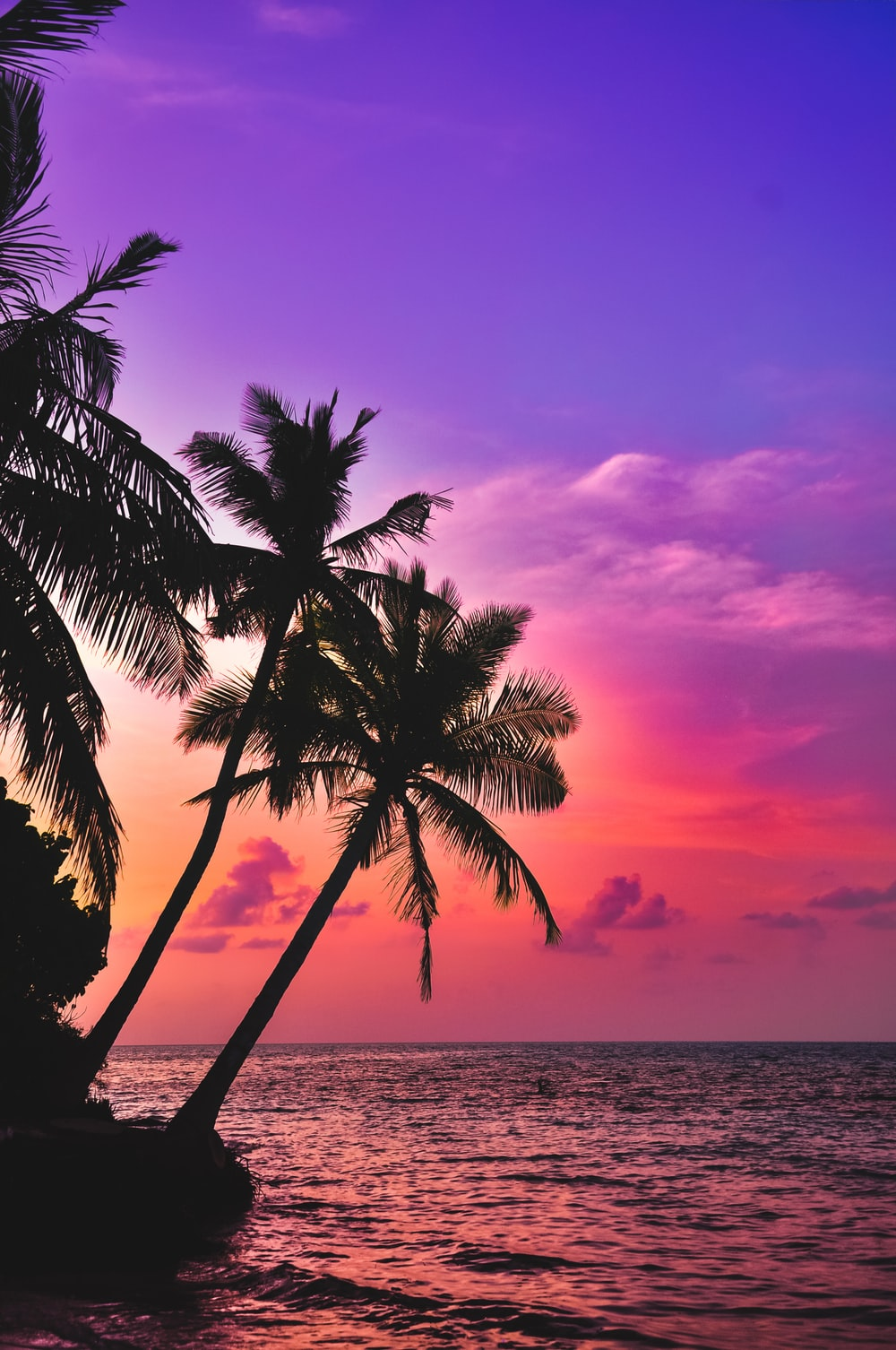 silhouette photography of coconut palm trees