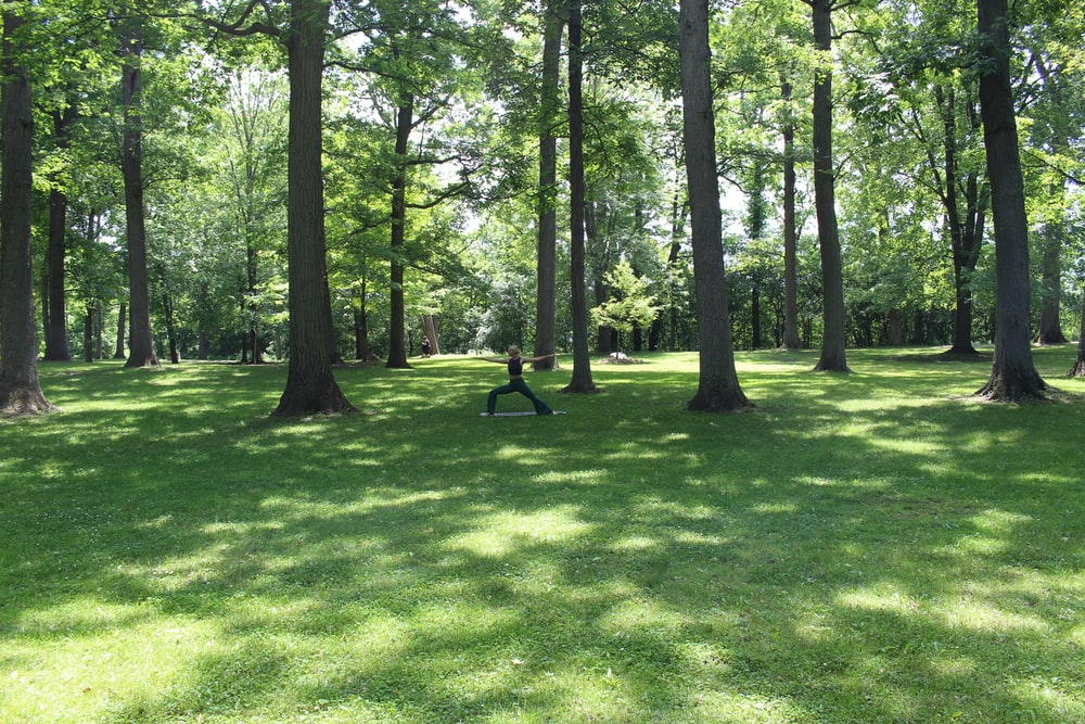 person standing on grass besides trees