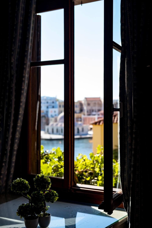green bonsai plant by the window