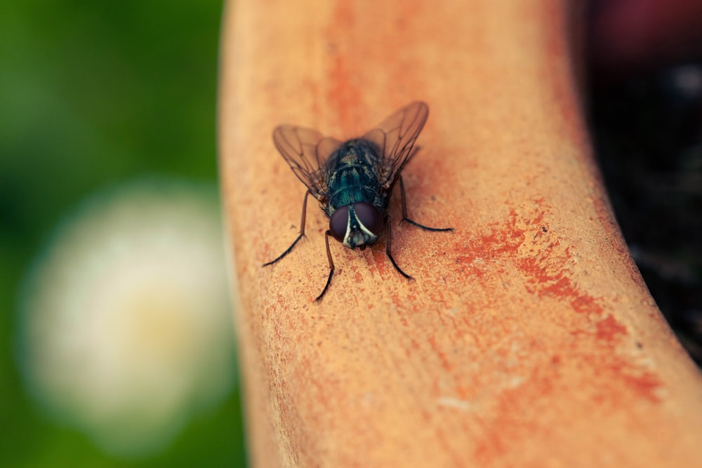 green bottle fly selective focus photography