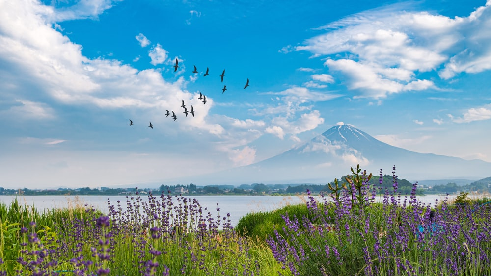 birds flying near mountain under cloudy sky during daytime