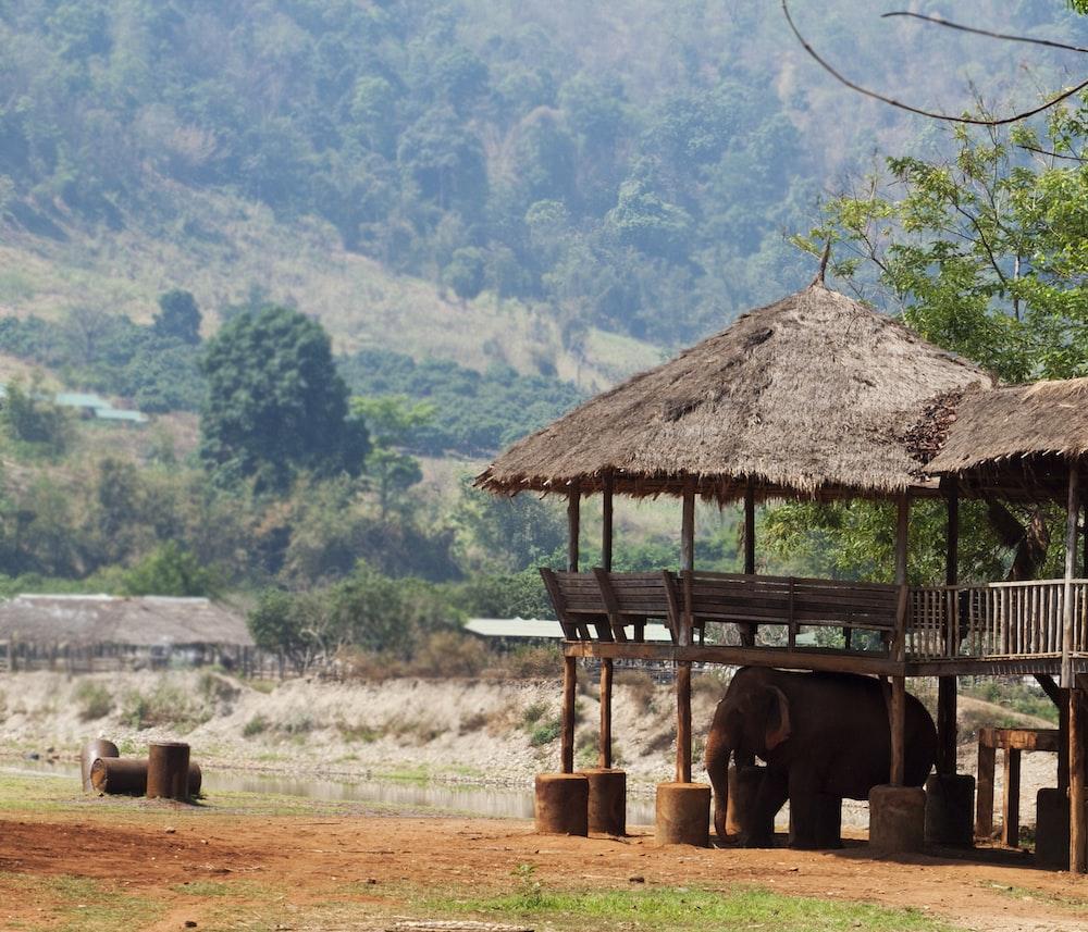 gray elephant under brown wooden hut during daytime