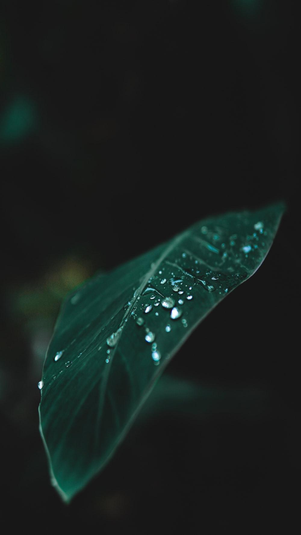 dew drops on green leaf