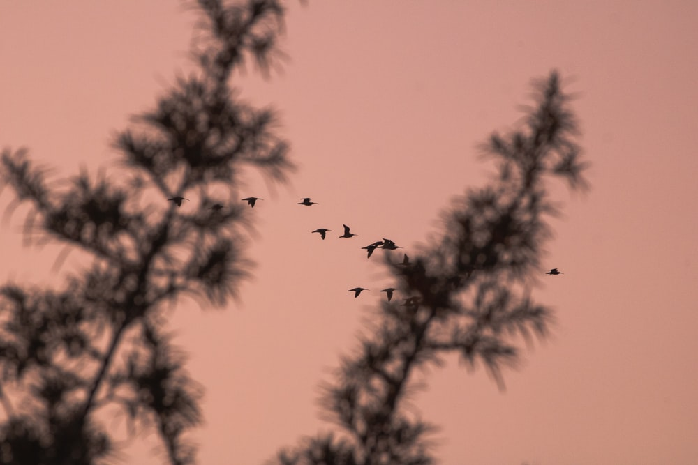 silhouette photo of birds