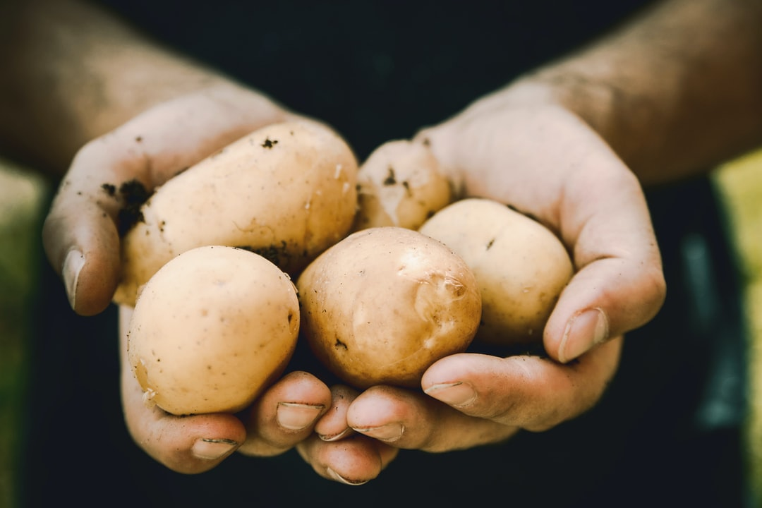 Potato starch benefits are important for health by JESHOOTS.COM