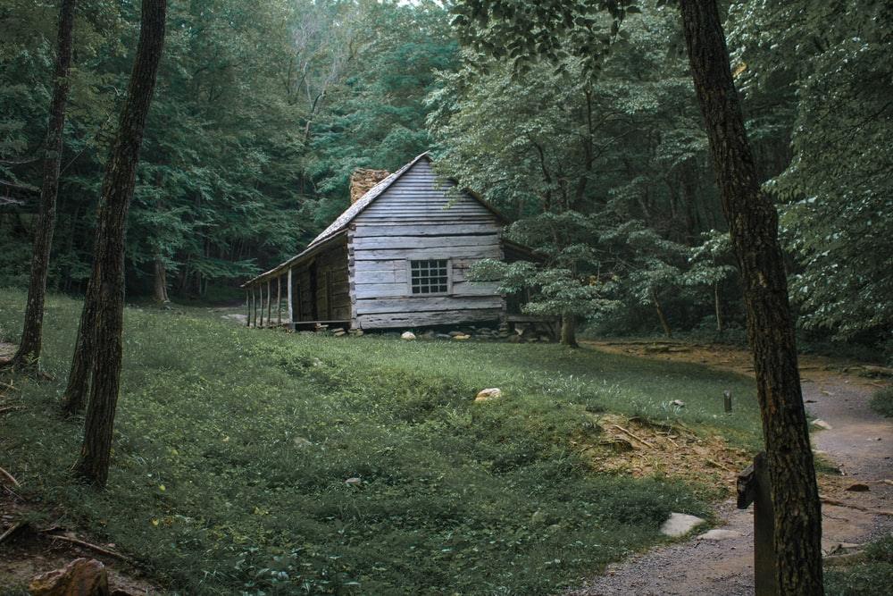 brown wooden house surrounded by trees
