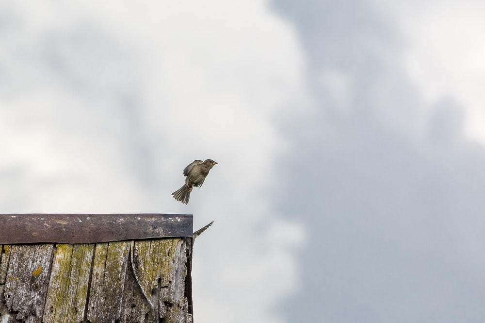 yellow bird flying off grey wooden roof
