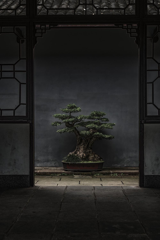 brown and green bonsai tree