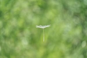 floating white flower