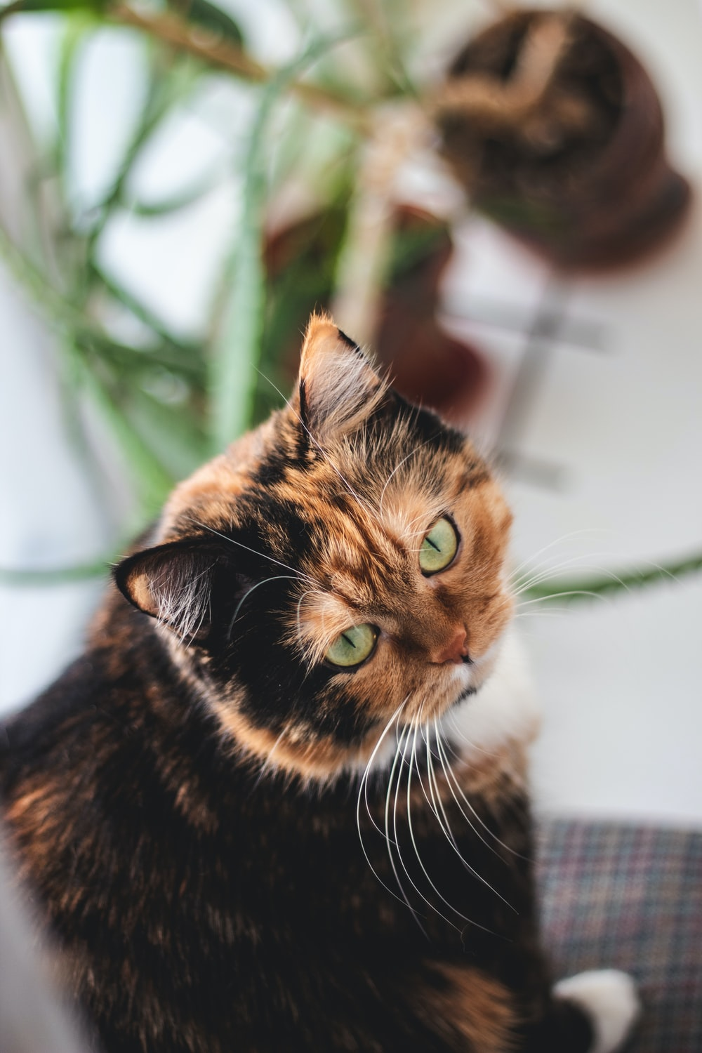 high-angle photography of calico cat