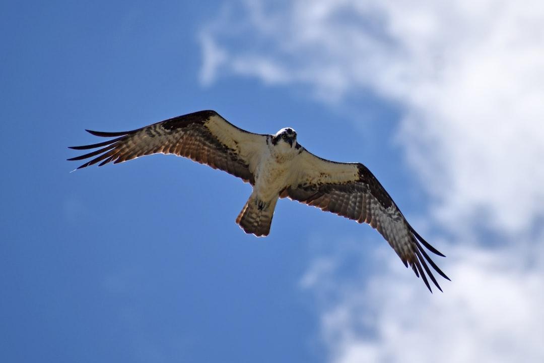 eagle soaring over