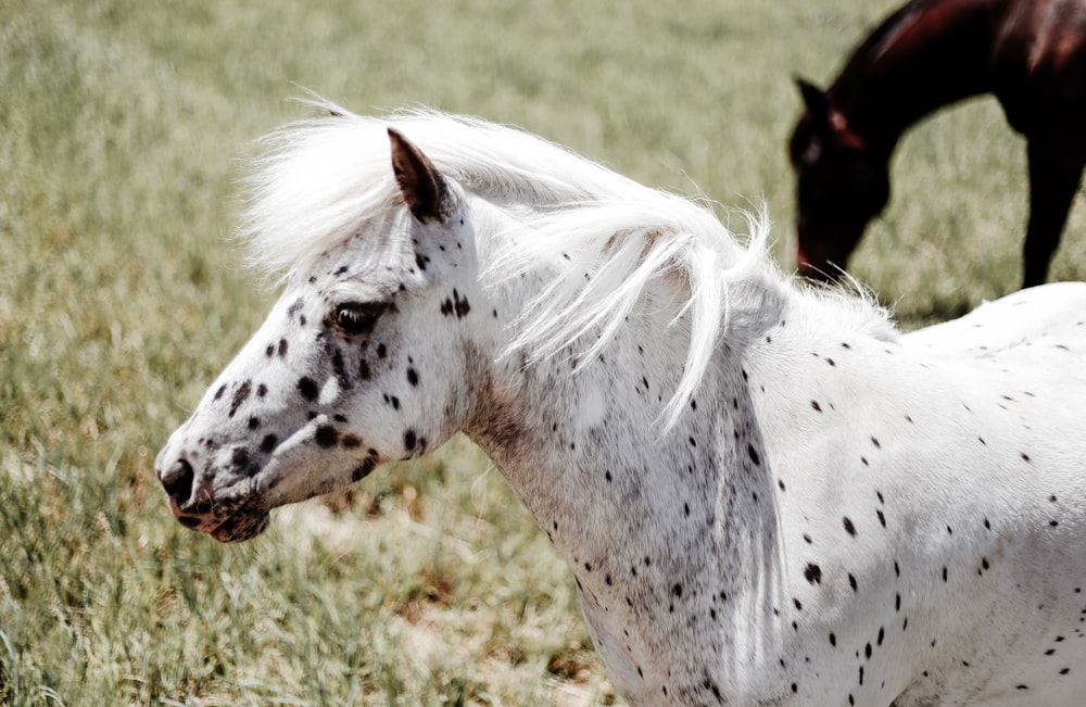 portrait of white and black coated horse