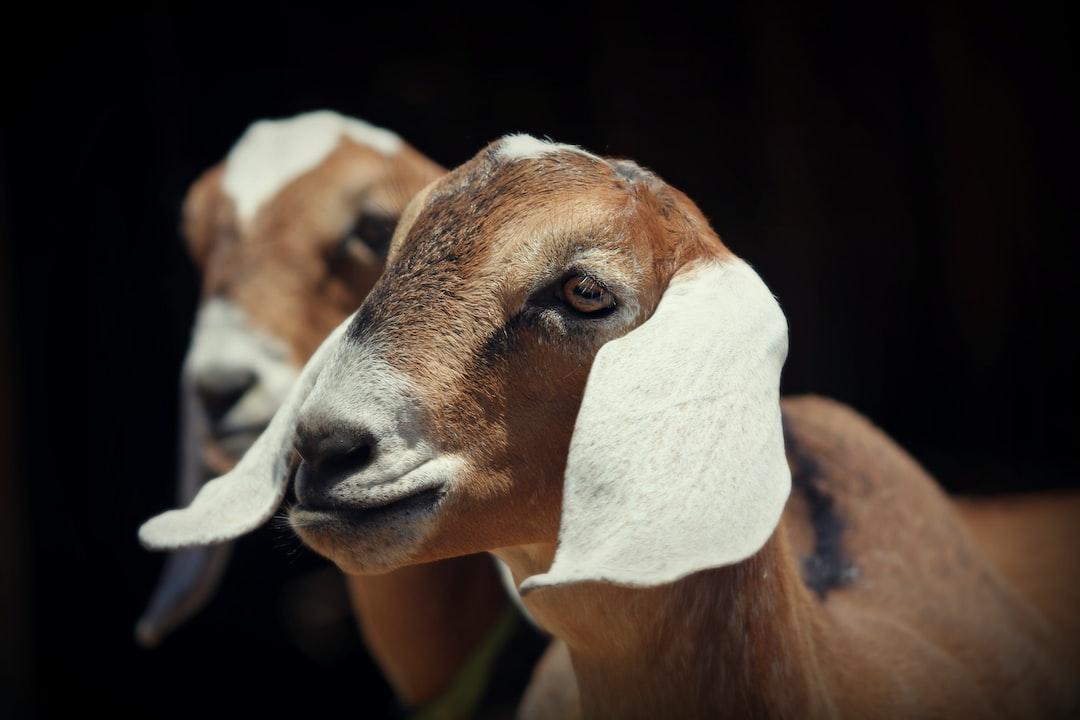 Taken at a goat farm in Big Bear, California
