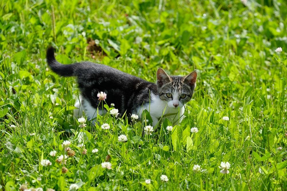 black and white kitten on green grass